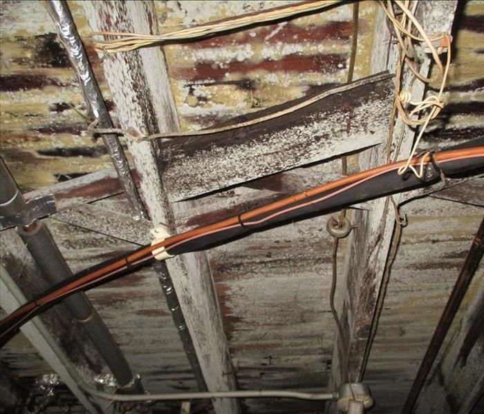 Mold in Rafters Before